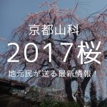 2017年京都山科の桜情報