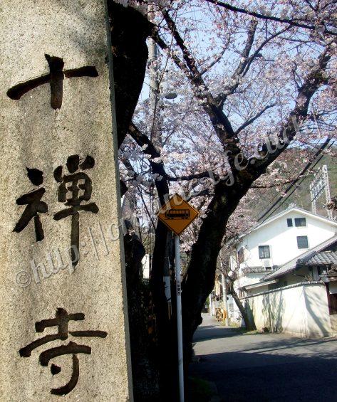 2017京都山科の桜の山科地蔵徳林庵